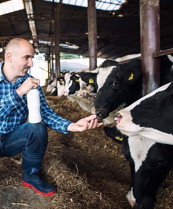 betador alimentation animale qualite